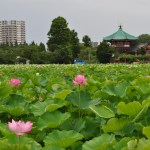Tokyo Now #8 : Ueno Park, full of culture & art, and more