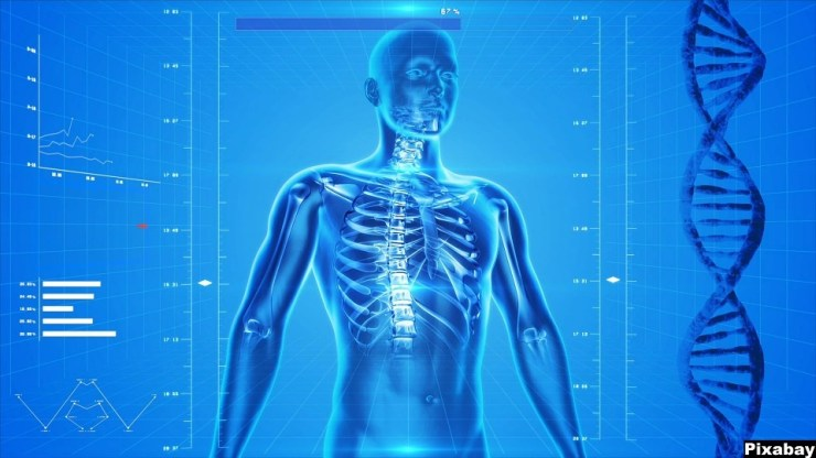 Image result for human body imaging devices