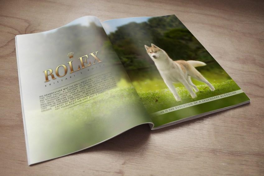 Imagem revista arte husky Rolex