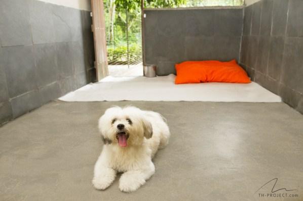 Foto canil hospedagem e cão
