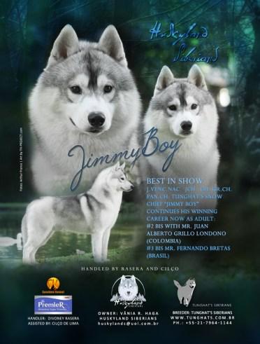 imagem arte criada para husky siberiano