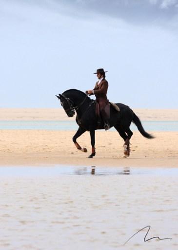 Foto cavalo areia