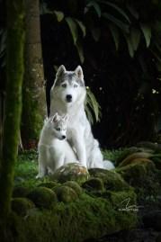 imagem foto husky siberiano mãe e filha