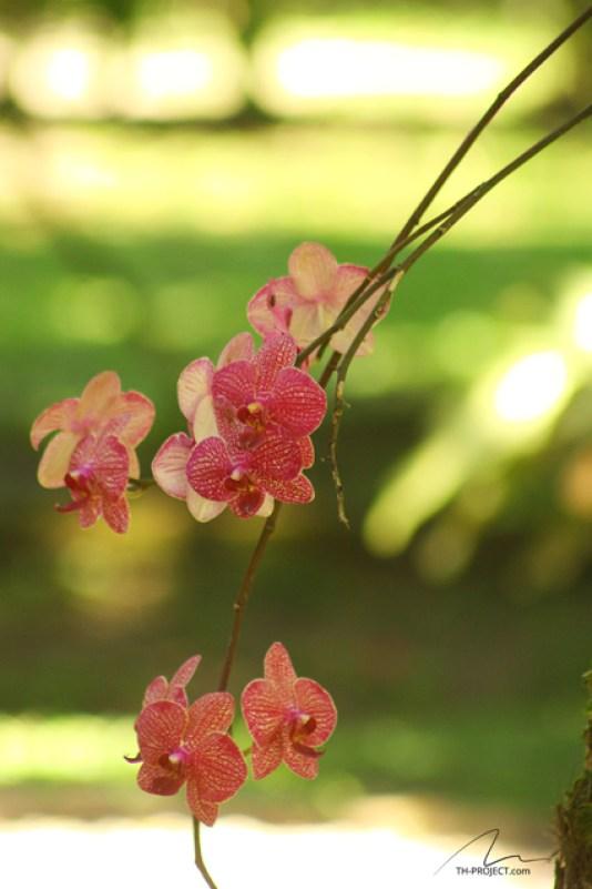 Foto flores Tunghat's Resort