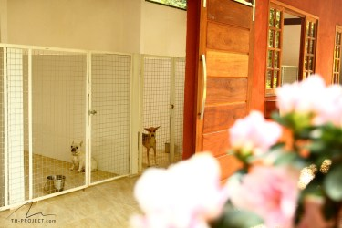 Foto canis hospedagem