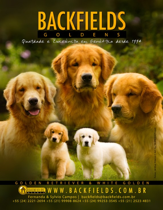 Arte revista especializada canil Golden Retrievers