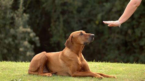 Basic Dog Commands That Every Dog Owner Should Teach Their Dog