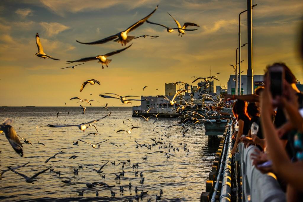 สถานตากอากาศบางปู สถานที่ถ่ายรูปสมุทรปราการ ที่ถ่ายรูปสวยๆใกล้กรุงเทพ