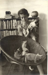 my-first-siamese-cat-family-19641