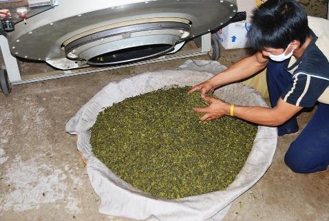 Teeverarbeitung in der Tee-Fabrik in Doi Mae Salong, Thailand