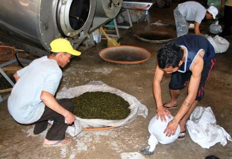 Tee wird nach dem Auskippen aus dem Kessel in ein Tuch gehüllt