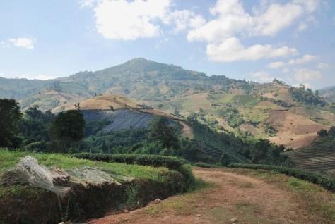 Doi Mae Salong, Thailand: Tee-Plantagen mit Landschaftshintergrund
