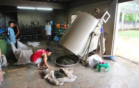 Überdimensionierte Teeblätter-Heiz-Rotationstrommel in Doi Wawee