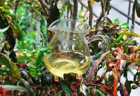 Tie Guan Yin Oolong Tee in meinem Garten