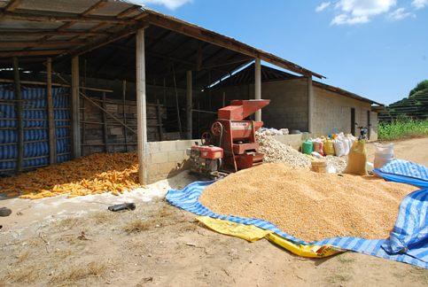 Maisverarbeitung in Ban Thoed Thai