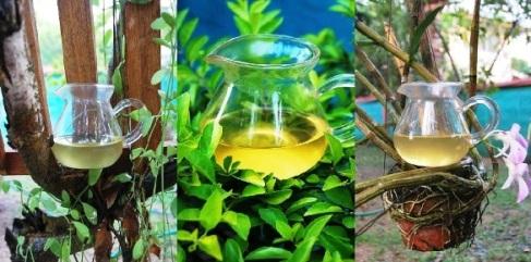 Die Farbe von Wildem Long Jing Tee in meinem Garten