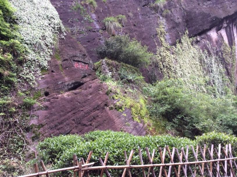 Da Hong Pao Motherbushes im Wuyishan Kerngebiet (Zheng Shan)