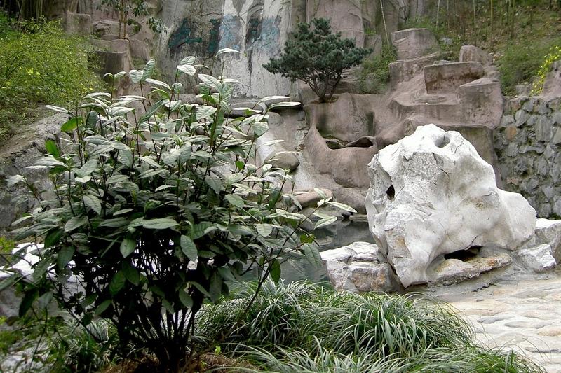 Long Jing Teebusch am Original-Drachenbrunnen in Hangzhou
