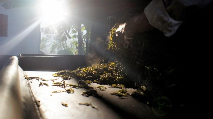 Manuelle Teeverarbeitung