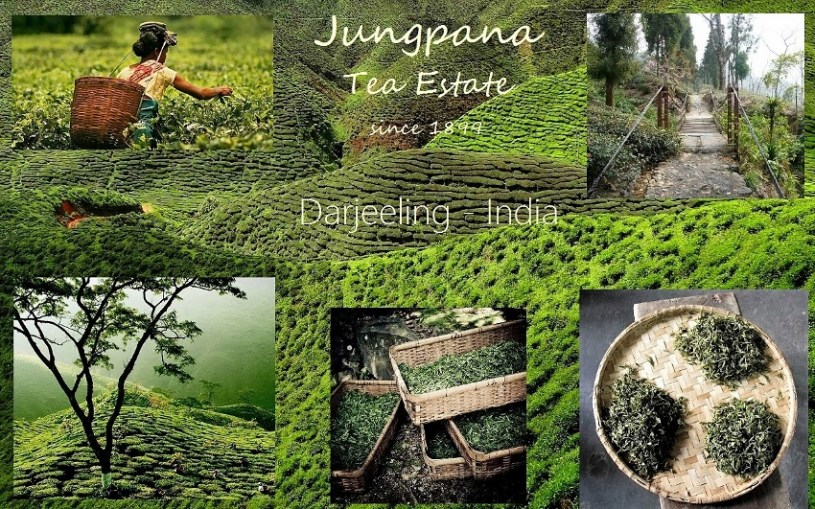 Jungpana Darjeeling Tea Estate