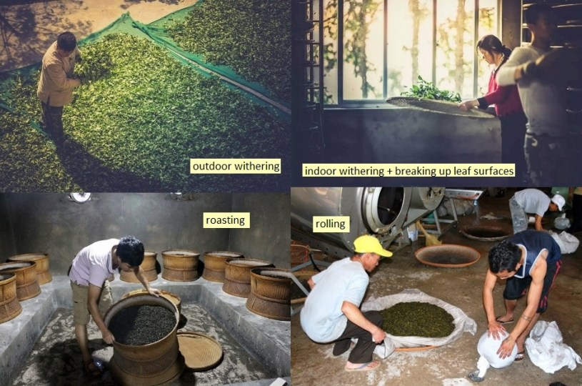 Oolong Tee Verarbeitung - Welken, Oxidieren, Rösten, Rollen