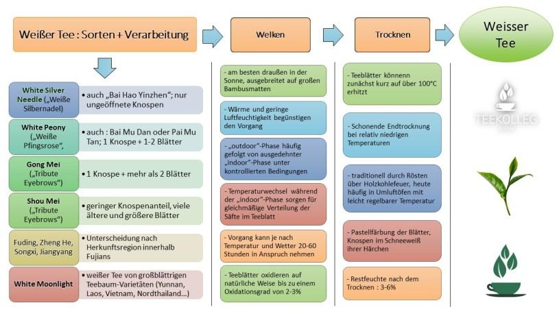 Die Verarbeitung von weissem Tee : Übersicht / Schaubild