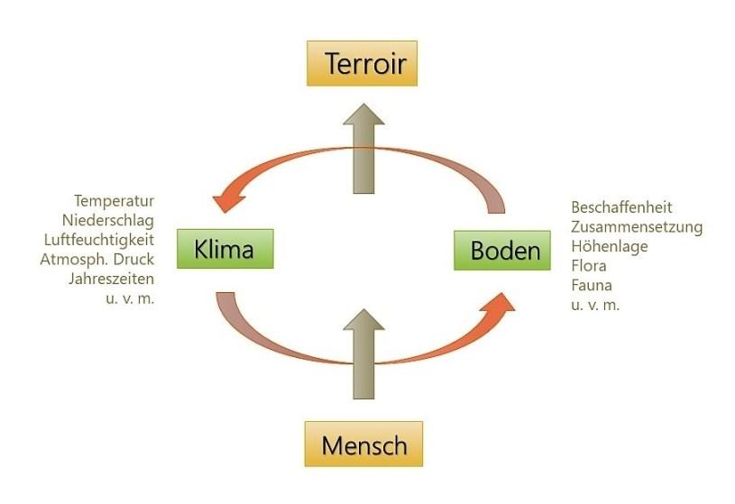 Terroir = Boden + Klima + Mensch