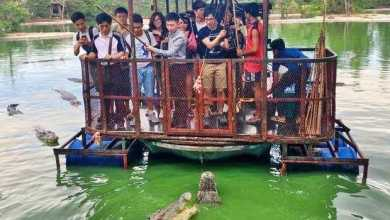 Photo of Une ferme aux crocodiles fermée à cause de photos choquantes !