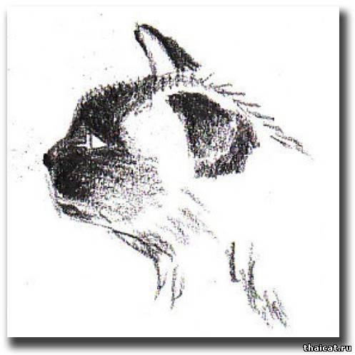 Obrázky oholený mačička