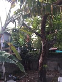 The back yard (#2)