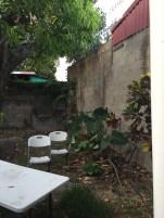 The back yard (#1)