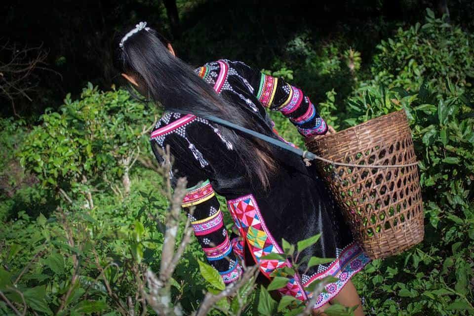 Girl walking in the fields. thailandeventguide.com