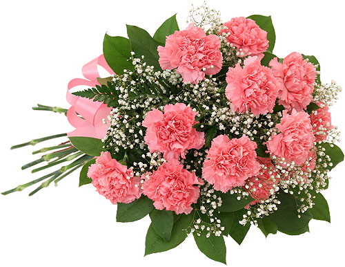 pink-carnations