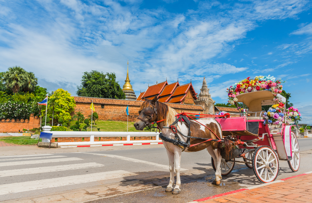 รถม้า (The Horse Drawn Carriage)
