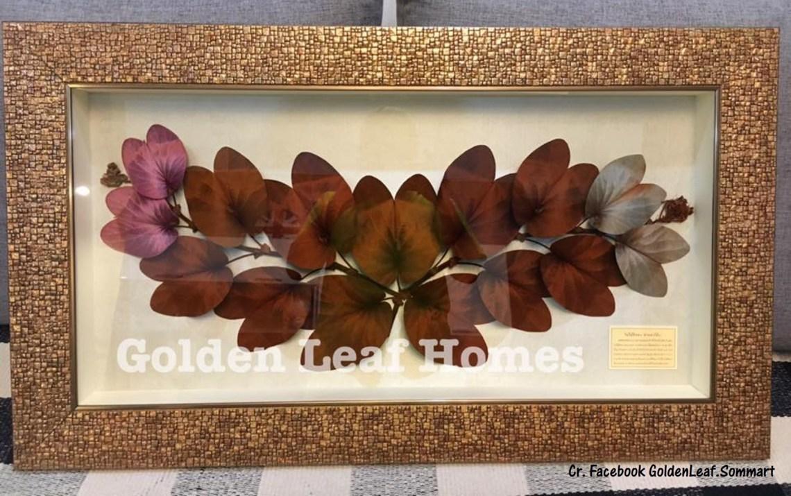Gold Leaf Bauhinia (ใบไม้สีทอง)