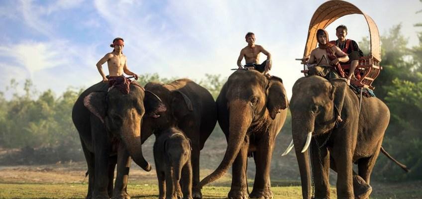 Ban Ta Klang Elephant Village (หมู่บ้านช้างบ้านตากลาง)