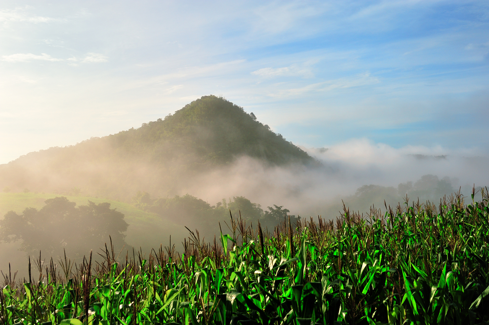 Phu Teoi National Park, Suphanburi Thailand