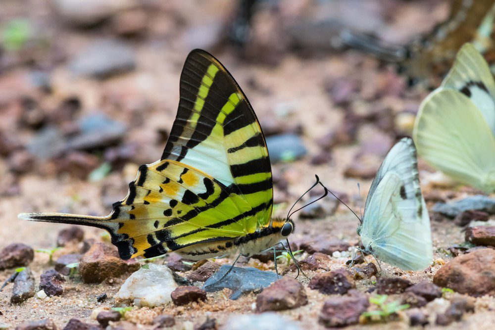 5 Places To See In Thailand In June Pang Sida National Park