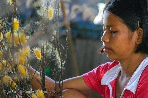 young girl sorting silk worm larvae