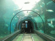 акваріум Пхукете