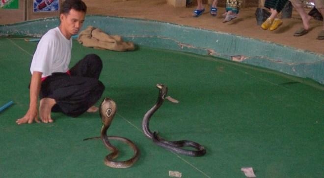 Змеиная ферма на Пхукете