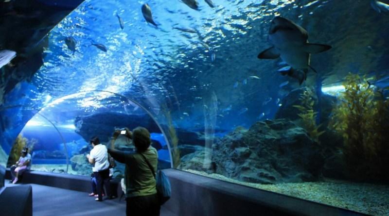 Аквариумом с подводным миром в Паттайе