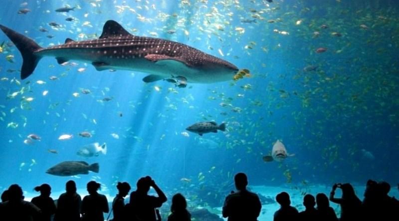 Что посмотреть на Пхукете - океанариум