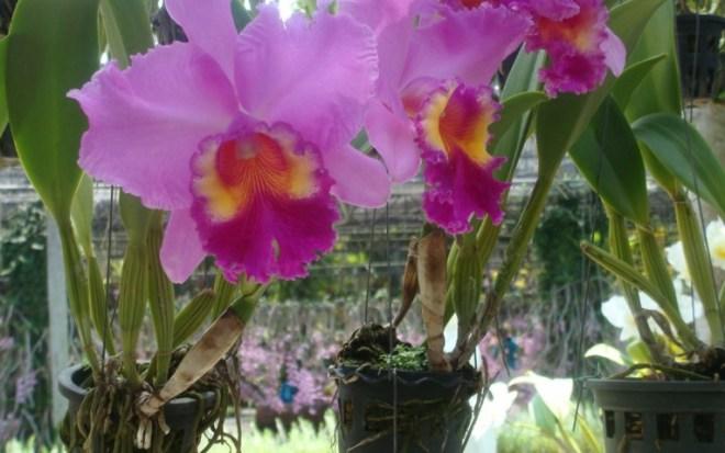 Тропический парк Нонг Нуч - Сад орхидей