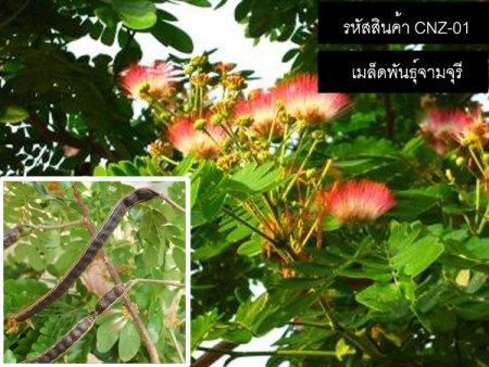 เมล็ดพันธุ์จามจุรี(ก้ามปูยักษ์)