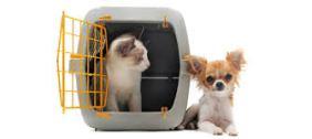 gato e dog na casinha