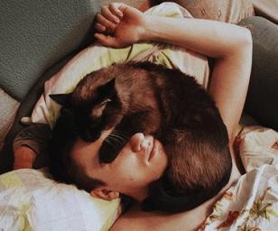 gato-dormindo-rosto