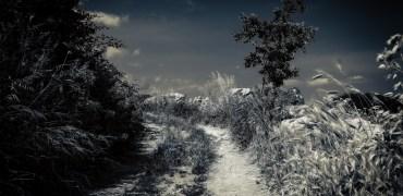 Crônica | O Sonho-Pesadelo