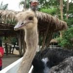 カオキアオ動物園(Khao Khaew Open Zoo)へ。バンコクから日帰り旅行