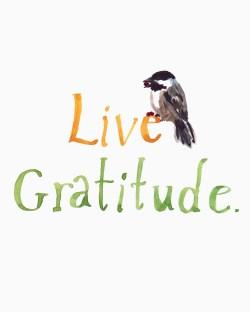 live-gratitude
